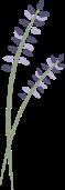 Lavender_Vertical_LR